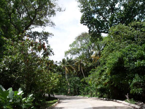 La carretera rodeada de vegetación y plantaciones de cacao.