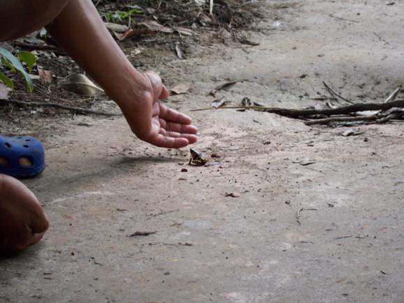 En la isla se encuentran gran cantidad y variedad de sapos.