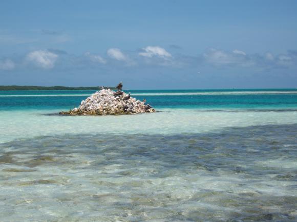 Montón de conchas de botuto de la pesca ilegal.