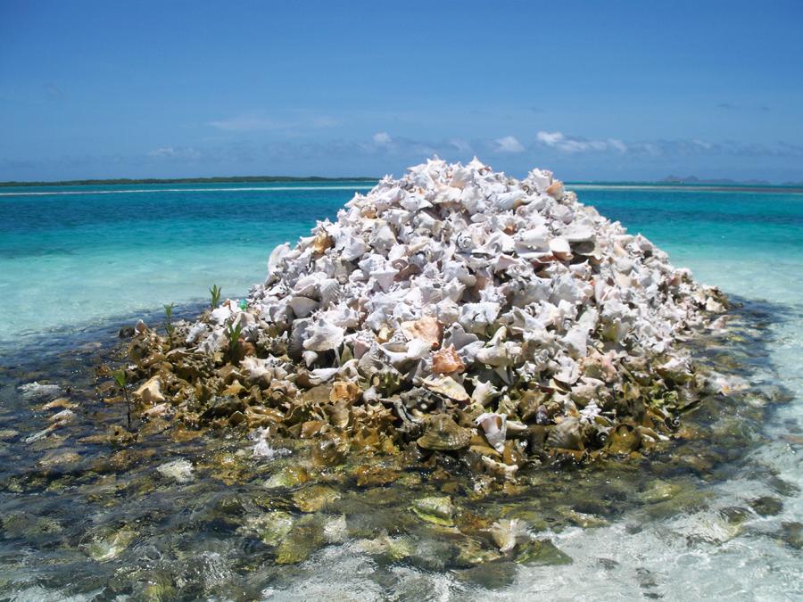Restos de Botutos. Su pesca y consumo está prohibido en Los Roques.