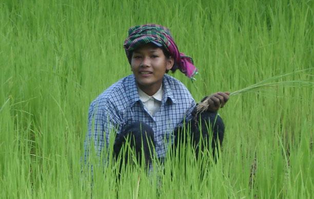 Las protagonistas encuentran en un arrozal su refugio.