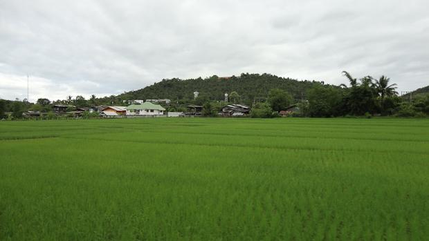 Campos de arroz entre montañas.