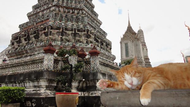 El templo, el gato meditando, y yo el turista, incordiando.