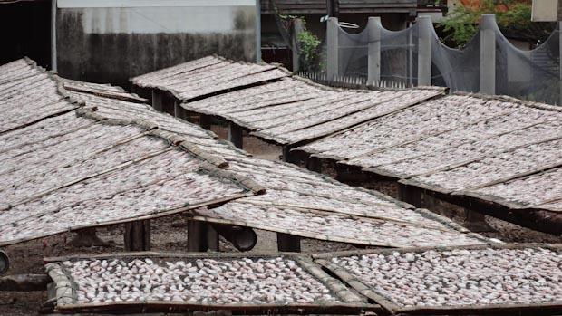 Algunas casas tienen en sus patios secaderos de pescado o calamares.