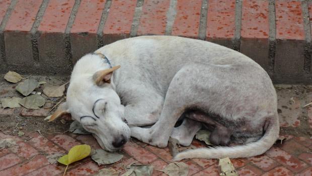 Perro con las cejas pintadas.