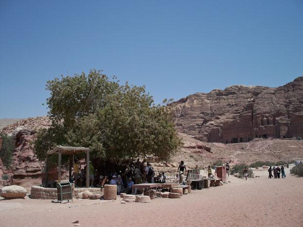 Grupo de turistas bajo el único árbol del entorno.