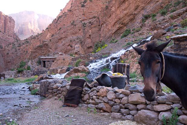 El dormitorio al fondo, junto a la cascada. Me lo parece, o la mula se ríe de mí...