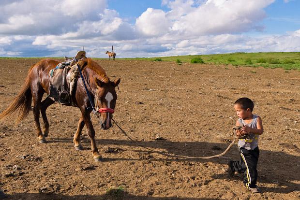 Haciéndole dar vueltas alrededor del corral para que el caballo dejara de sudar.