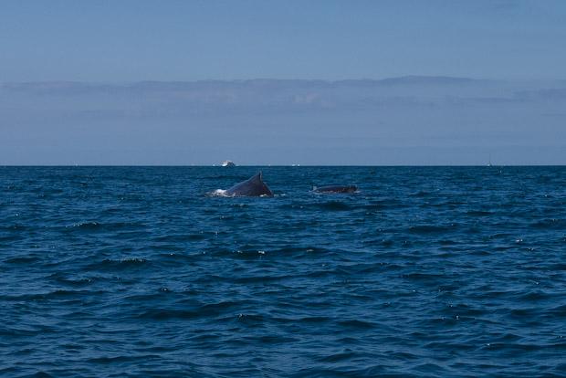 Parte de su oferta se centra en la pesca deportiva y el avistamiento de ballenas.