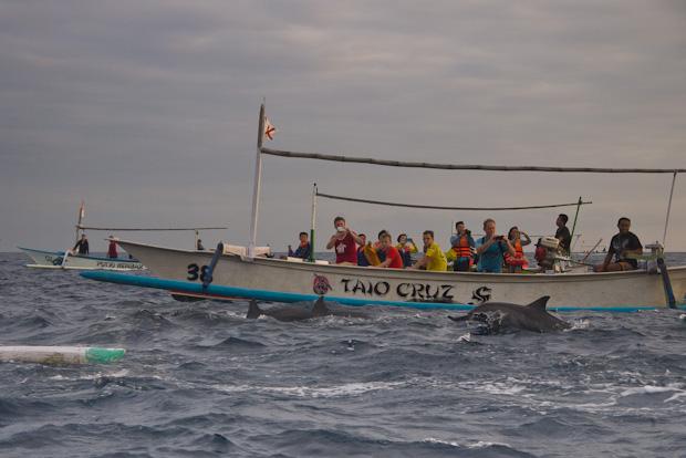 Los delfines se dejan ver a pesar de molesetarlos con tanta barca...