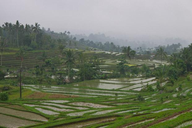 Terrazas de arroz típicas.