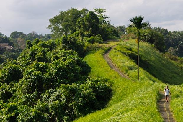 Caminos que no terminan para pasear. Me fascina ese color verde.
