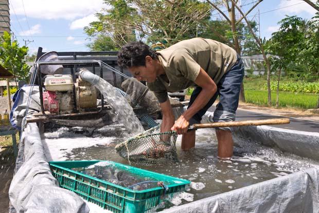 Vendedor de pescado fresco. Sí es una furgoneta ambulante con piscina...