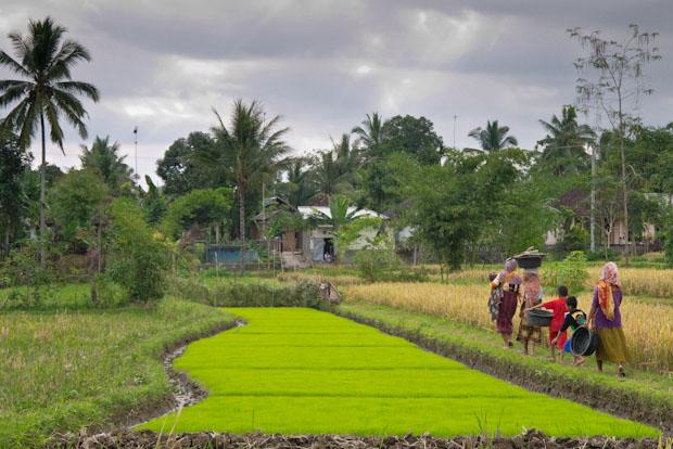 Al atardecer, las mujeres y niños recogen los enseres de los arrozales y se vuelven a sus casas.