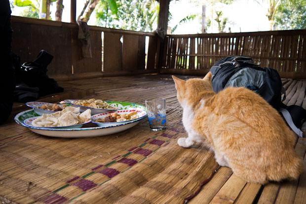 El gato acechando los aperitivos que nos han ofrecido.
