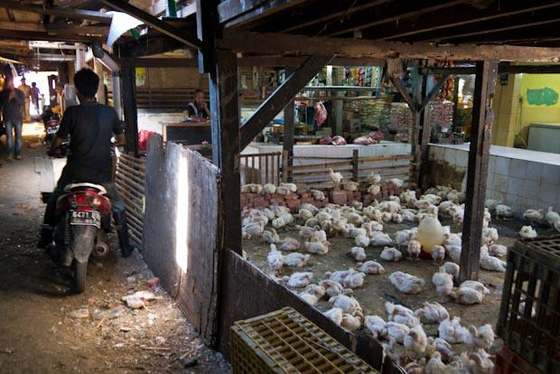 """Granja de pollos. Al fondo, la carnicería , sobre el mostrador """"blanco""""."""
