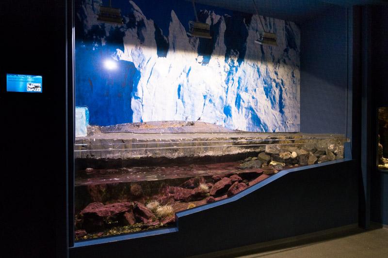 Recreación del fondo marino del mar de Barens.