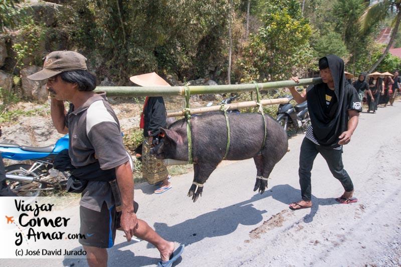 Forma tradicional de transportar a los cerdos en Toraja. Las señoras de la familia detrás, de luto antes de presentar sus respetos a la familia.