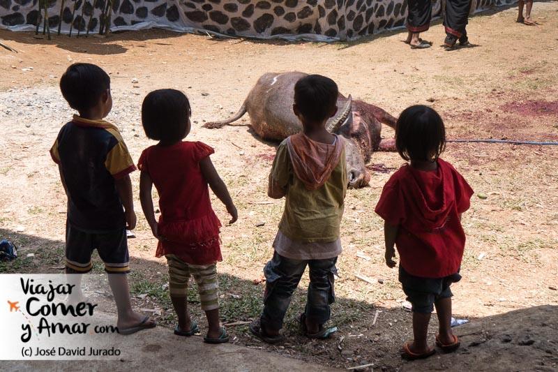 La muerte de los animales, aunque parezca cruel es vivida con mucha curiosidad por los más pequeños.