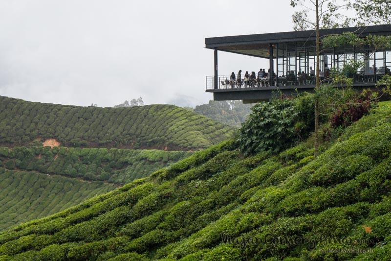 Mirador y cafetería en la plantación de té Boh.