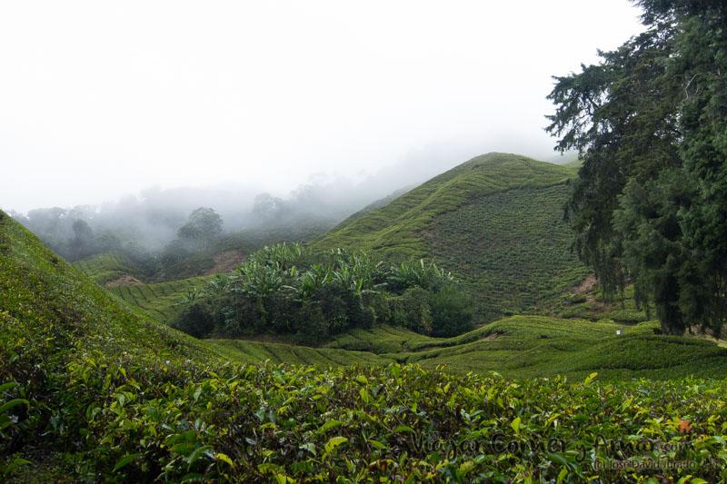 Cameron-Highlands-Malasia-Viajar-Comer-Y-Amar-MY-P1360638