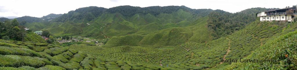 Barat tea plantation. Al sur de Tanah Rata.