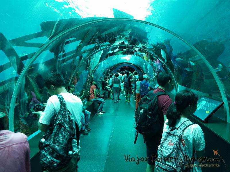 Uno de los túneles bajo el estanque principal.