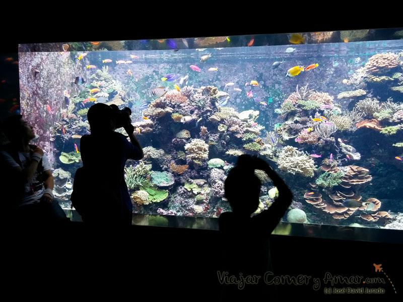 Uno de los acuarios de la zona dedicada al Mar Rojo. Increíble variedad de color y corales.
