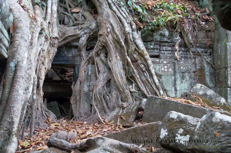 Dicen que el árbol quiso respetar el buda de la parte central de la imagen y dejó un hueco para que asomara la cabeza.
