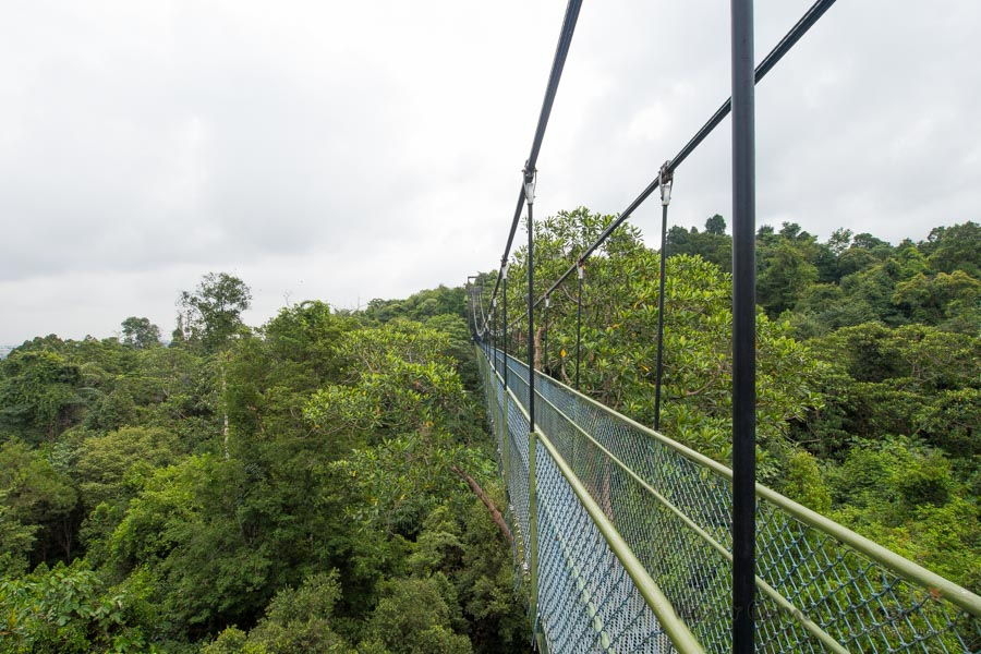 Singapur-Macritchie-Tree-Top-Walk-SG-P1380532-Viajar-Comer-Y-Amar