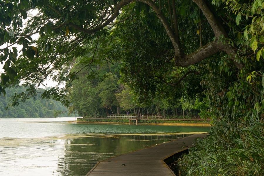 Singapur-Macritchie-Tree-Top-Walk-SG-P1380603-Viajar-Comer-Y-Amar