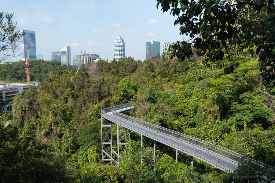 Singapur-Southern-Ridges-Henderson-Waves-SG-P1380251-Viajar-Comer-Y-Amar