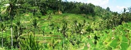 Terrazas de arroz de Tagalalang